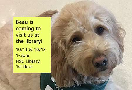 Beau the therapy dog information slide