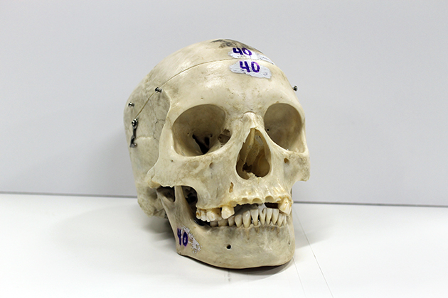 Skull for check out